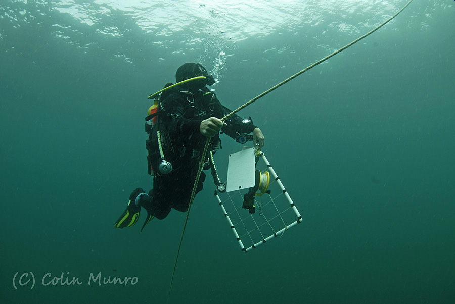 A Marine Bio-images scientific diver ascendings at the end of a survey dive. Colin Munro